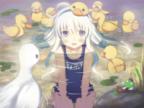 Dr. Duck's Avatar